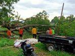 Angin Kencang Di Payakumbuh, Akibatkan Puluhan Pohon Tumbang
